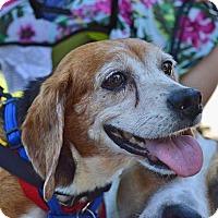 Adopt A Pet :: Ruth (Has Application) - Washington, DC