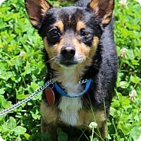 Adopt A Pet :: Hamlet - Waldorf, MD