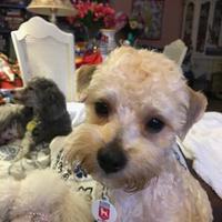 Adopt A Pet :: Chepas - St. Petersburg, FL