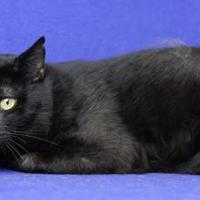 Adopt A Pet :: Alex - Blackwood, NJ