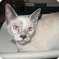 Adopt A Pet :: Bettina - Fallon, NV