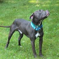 Adopt A Pet :: Dibo - Elkhorn, WI