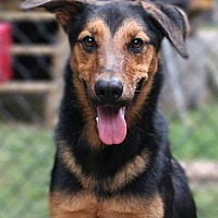 Adopt A Pet :: Bodie - Union, CT