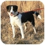 Photo 1 - Border Collie Mix Dog for adoption in St. James, Missouri - Queenie