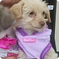 Adopt A Pet :: Pammy - Encinitas, CA