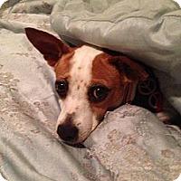 Adopt A Pet :: Moca - Honolulu, HI