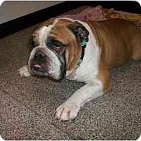 Adopt A Pet :: Henry*adoption pending* - Gilbert, AZ
