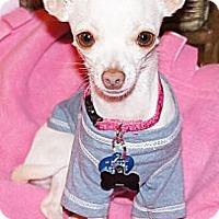Adopt A Pet :: QUEENIE - AUSTIN, TX