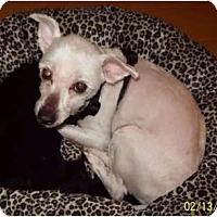 Adopt A Pet :: Dandi Valentino - Tallahassee, FL