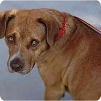 Adopt A Pet :: Thomas - Gilbert, AZ