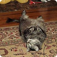 Adopt A Pet :: Zeus - Andover, KS