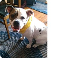 Adopt A Pet :: Lilly - Acushnet, MA