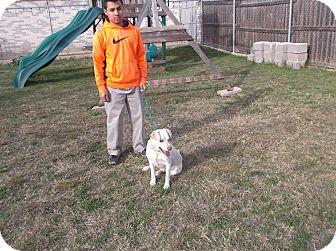 Labrador Retriever/Terrier (Unknown Type, Medium) Mix Dog for adoption in San Antonio, Texas - Hatch