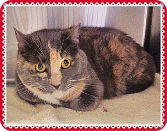 Calico Cat for adoption in Marietta, Georgia - MISTY