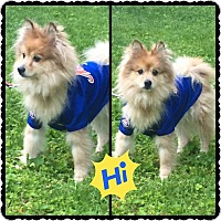 Adopt A Pet :: Diggy - Hicksville, NY