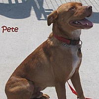 Adopt A Pet :: PETE - Weatherford, OK
