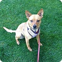 Adopt A Pet :: Reba - Denver, CO