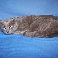 Adopt A Pet :: K-Samples4-Ashes - Colorado Springs, CO