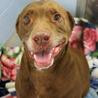 Adopt A Pet :: Hank - Lafayette, IN