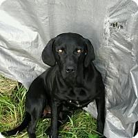 Adopt A Pet :: Bella - Jamestown, TN