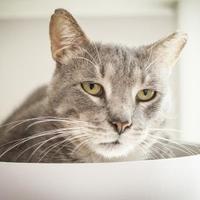 Adopt A Pet :: Wilco - Chicago, IL
