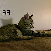 Adopt A Pet :: Fifi - Nashville, TN