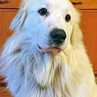 Adopt A Pet :: Patti in OH - Beacon, NY