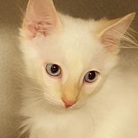 Adopt A Pet :: Franz - Grayslake, IL