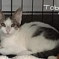 Adopt A Pet :: Toby - Land O Lakes, FL
