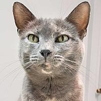 Adopt A Pet :: Mouse - McPherson, KS