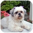 Photo 2 - Lhasa Apso Dog for adoption in Los Angeles, California - NELLIE