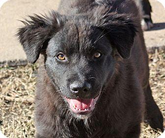 Labrador Retriever Mix Dog for adoption in Marion, Arkansas - Harley