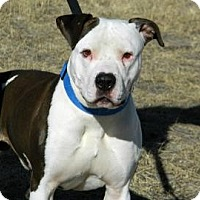 Adopt A Pet :: Zipper - Cheyenne, WY