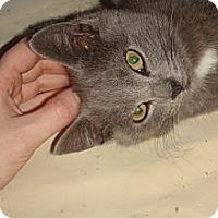 Adopt A Pet :: Blueberry - Brooklyn, NY