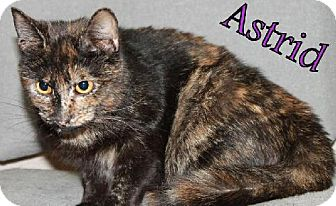 Domestic Shorthair Cat for adoption in Lewisburg, West Virginia - Astrid