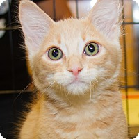 Adopt A Pet :: Hank - Irvine, CA