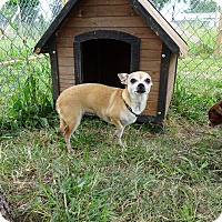 Adopt A Pet :: Tinka - Delaware, OH