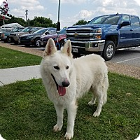 Adopt A Pet :: Avalanche - Dripping Springs, TX