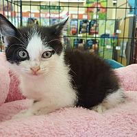 Adopt A Pet :: Poppy - Smyrna, GA