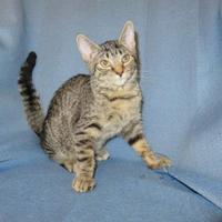 Adopt A Pet :: Dean - Chicago, IL