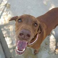 Adopt A Pet :: Bretta - Aberdeen, SD