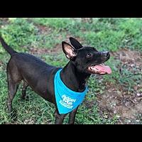 Adopt A Pet :: Ryder - Austin, TX