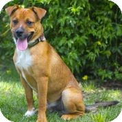 Terrier (Unknown Type, Medium) Mix Dog for adoption in Sonoma, California - Quincy