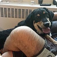 Adopt A Pet :: Henry - Hamilton, ON