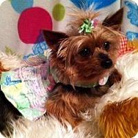Adopt A Pet :: Madeline - Fremont, CA