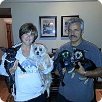 Adopt A Pet :: Winky - Sacramento, CA