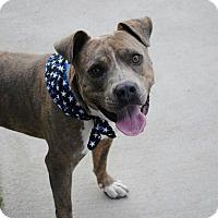 Adopt A Pet :: Rocky - Santa Rosa, CA