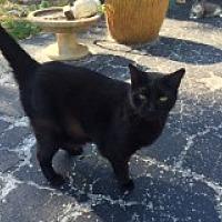 Adopt A Pet :: Babs - Naples, FL