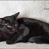 Adopt A Pet :: Forest - Trexlertown, PA