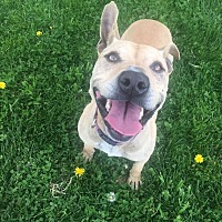 Adopt A Pet :: Cali - Tracy, CA